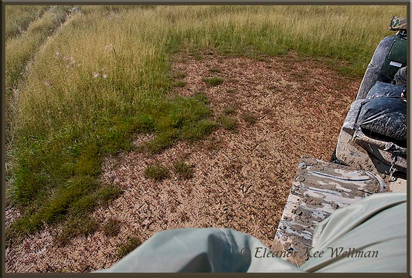 Mud Patch - Grasses Removed by Snow Geese<br /> Cape Tatnum, Hudson Bay, Manitoba