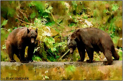 """""SPECTATORS"", black bears on a log, Anan creek, Alaska, USA."