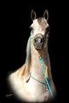 ArabianmareUPv1471