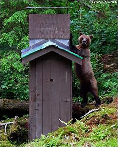 """""""SHOULD I PUSH IT OVER?"""",Anan creek,Alaska,USA."""