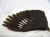 26 - Pileated Woodpecker, Dryocopus pileatus, male. UWBM#: 63709 <br /> Family: Picidae