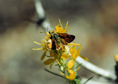 WBrandedSkipper7SEP2002001