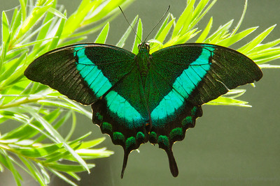 Butterfly Wonderland Trip 5-2014
