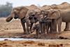 African Elephants, Loxodonta africana, at a Water Hole,  Tsavo East National Park, Kenya, Africa, Proboscidea Order, Elephantidae Family