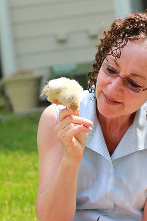 Baby Chickens 5/18/2013