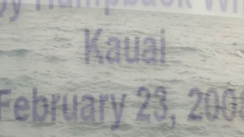 Baby Humpback Whale, Kauai 2008