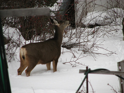 Back Yard DEERS