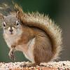 Red Squirrel-09132014-124255(f).jpg
