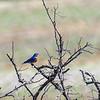 Back-yard-birds-9-March-2017-9131