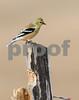 bird 018
