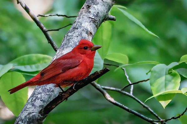 200430 Backyard Birds 01