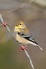 bird 032