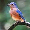 200801 Backyard Birds 2