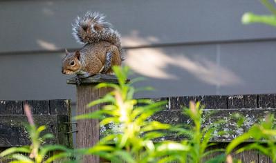 Backyard-Critters-20200618-07540400