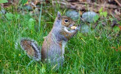 Backyard-Critters-20200617-07435800