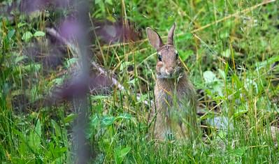 Backyard-Critters-20200615-18211533