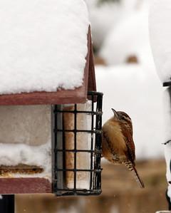 Birds in the backyard, in snow.