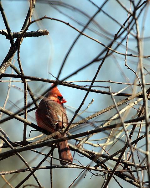 Birds in the backyard.