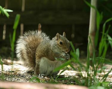 Squirrels.