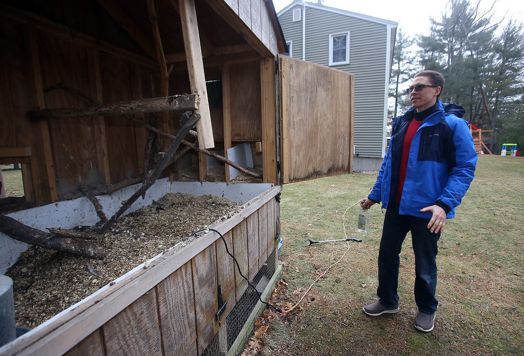 . Alexander Melville of Chelmsford with his family\'s chicken coop. Under new town regulations, they face costs including $1,500-2,000 for a plot plan. The portion is the coop, where the chickens go at night. The \'deep litter\' is a mix of chicken poop and pine shavings. The big doors are normally closed but open for cleaning and maintenance. (SUN/Julia Malakie)