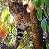 Bobcats(edit)_0025