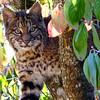 Bobcats(edit)_0023