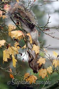 Squirrel(edit)_0023
