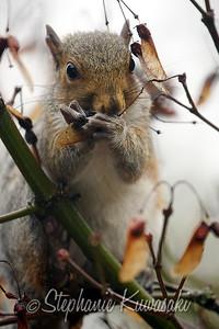 Squirrel(edit)_0019