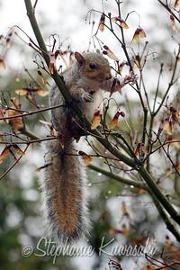 Squirrel(edit)_0017