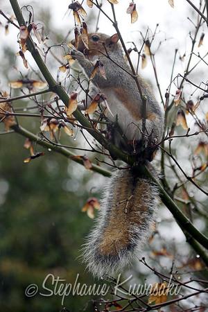 Squirrel(edit)_0006