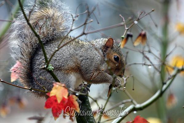 Squirrel(edit)_0007