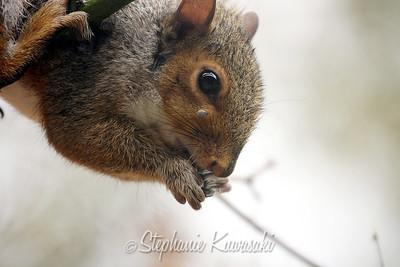 Squirrel(edit)_0020