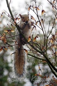 Squirrel(edit)_0016