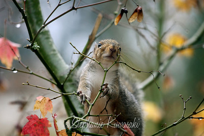Squirrel(edit)_0009