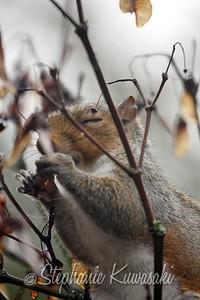 Squirrel(edit)_0003