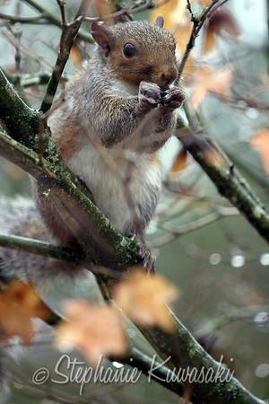 Squirrel(edit)_0001