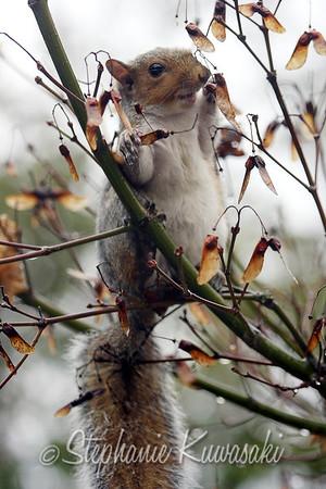 Squirrel(edit)_0014