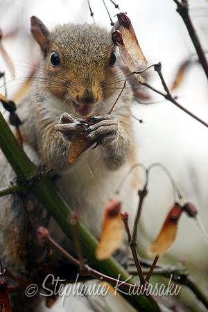 Squirrel(edit)_0018