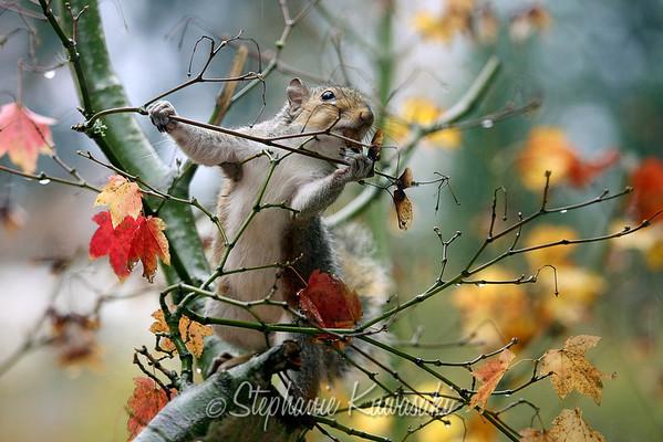 Squirrel(edit)_0012