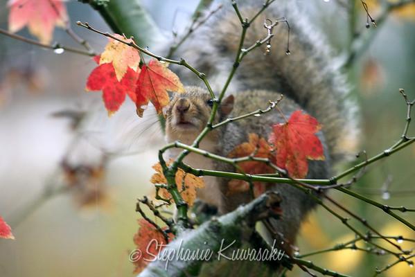 Squirrel(edit)_0008