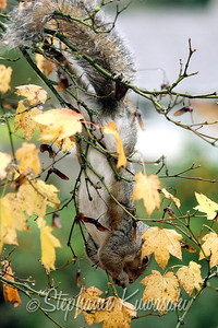 Squirrel(edit)_0024