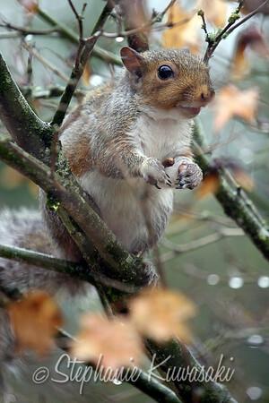 Squirrel(edit)_0002