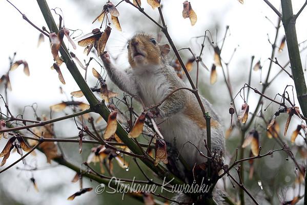 Squirrel(edit)_0004