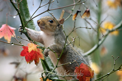 Squirrel(edit)_0010