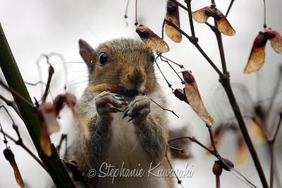 Squirrel(edit)_0013
