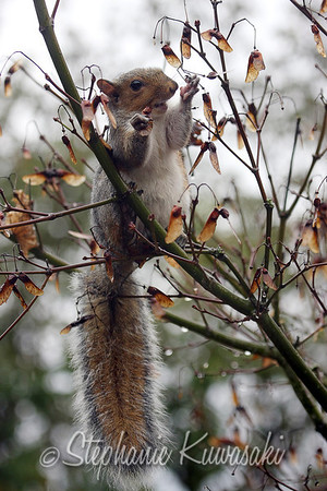 Squirrel(edit)_0015