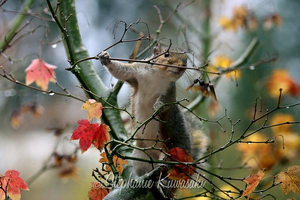 Squirrel(edit)_0011