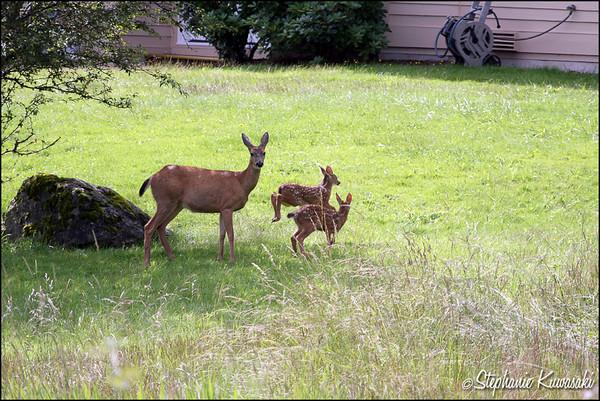 Deer0703(web)_0003