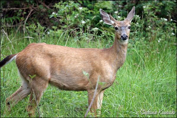 Deer0612(web)_0018