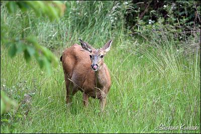 Deer0612(web)_0002